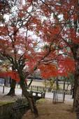Day 2, 奈良鹿公園‧世界遺產東大寺:DSC05443.JPG