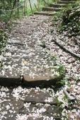 2013 土城桐花,白雪紛飛...落花鋪滿菜園裡~~:IMG_8927.JPG