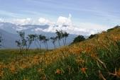 天秤颱風過後‧六十石山金針花,依然綻放~~:IMG_7062.JPG