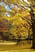 Day 2, 奈良鹿公園‧世界遺產東大寺:DSC05367.JPG