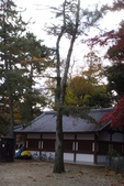 Day 2, 奈良鹿公園‧世界遺產東大寺:DSC05302.JPG