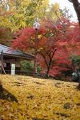 Day 2, 奈良鹿公園‧世界遺產東大寺:DSC05416.JPG