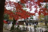 Day 2, 奈良鹿公園‧世界遺產東大寺:DSC05444.JPG