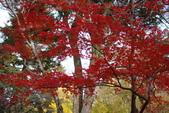 Day 2, 奈良鹿公園‧世界遺產東大寺:DSC05408.JPG