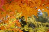 Day 2, 奈良鹿公園‧世界遺產東大寺:DSC05389.JPG