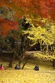 Day 2, 奈良鹿公園‧世界遺產東大寺:DSC05394.JPG