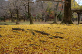 Day 2, 奈良鹿公園‧世界遺產東大寺:DSC05417.JPG