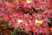 Day 2, 奈良鹿公園‧世界遺產東大寺:DSC05429.JPG