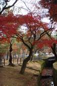 Day 2, 奈良鹿公園‧世界遺產東大寺:DSC05280.JPG