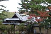 Day 2, 奈良鹿公園‧世界遺產東大寺:DSC05274.JPG