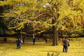 Day 2, 奈良鹿公園‧世界遺產東大寺:DSC05374.JPG