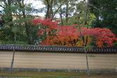 Day 2, 奈良鹿公園‧世界遺產東大寺:DSC05275.JPG
