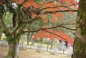 Day 2, 奈良鹿公園‧世界遺產東大寺:DSC05445.JPG