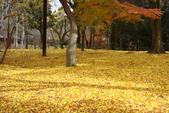 Day 2, 奈良鹿公園‧世界遺產東大寺:DSC05432.JPG