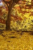 Day 2, 奈良鹿公園‧世界遺產東大寺:DSC05382.JPG