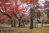 Day 2, 奈良鹿公園‧世界遺產東大寺:DSC05418.JPG