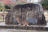 Day 2, 奈良鹿公園‧世界遺產東大寺:DSC05259.JPG