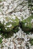 2013 土城桐花,白雪紛飛...落花鋪滿菜園裡~~:IMG_9082.JPG