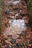 Day 2, 奈良鹿公園‧世界遺產東大寺:DSC05281.JPG