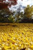 Day 2, 奈良鹿公園‧世界遺產東大寺:DSC05383.JPG