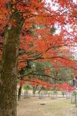 Day 2, 奈良鹿公園‧世界遺產東大寺:DSC05446.JPG