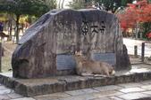Day 2, 奈良鹿公園‧世界遺產東大寺:DSC05261.JPG