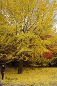 Day 2, 奈良鹿公園‧世界遺產東大寺:DSC05402.JPG