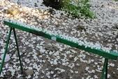 2013 梅雨季前,土城‧最後一場桐花雪~~:IMG_9589.JPG