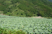 初訪武陵農場:DSC04109.JPG