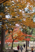 Day 2, 奈良鹿公園‧世界遺產東大寺:DSC05348.JPG