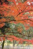 Day 2, 奈良鹿公園‧世界遺產東大寺:DSC05447.JPG