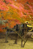 Day 2, 奈良鹿公園‧世界遺產東大寺:DSC05390.JPG