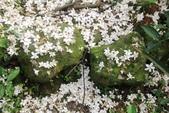 2013 土城桐花,白雪紛飛...落花鋪滿菜園裡~~:IMG_9086.JPG