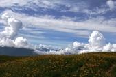 天秤颱風過後‧六十石山金針花,依然綻放~~:IMG_7255.JPG