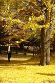 Day 2, 奈良鹿公園‧世界遺產東大寺:DSC05375.JPG