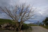 天秤颱風過後‧六十石山金針花,依然綻放~~:IMG_7501.JPG