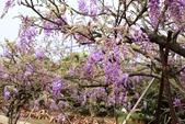 一段公車票‧帶來一段不可思議的紫色奇蹟~~:IMG_5678.JPG