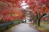 Day 2, 奈良鹿公園‧世界遺產東大寺:DSC05419.JPG