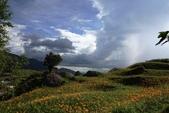 天秤颱風過後‧六十石山金針花,依然綻放~~:IMG_7402.JPG