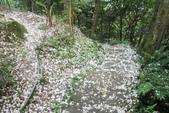 2013 土城桐花,白雪紛飛...落花鋪滿菜園裡~~:IMG_9007.JPG