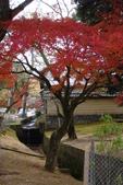 Day 2, 奈良鹿公園‧世界遺產東大寺:DSC05282.JPG
