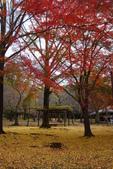 Day 2, 奈良鹿公園‧世界遺產東大寺:DSC05409.JPG