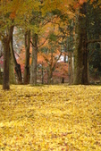 Day 2, 奈良鹿公園‧世界遺產東大寺:DSC05434.JPG