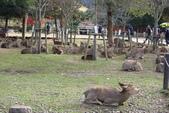 Day 2, 奈良鹿公園‧世界遺產東大寺:DSC05262.JPG