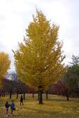 Day 2, 奈良鹿公園‧世界遺產東大寺:DSC05395.JPG