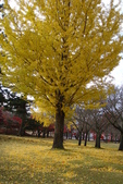 Day 2, 奈良鹿公園‧世界遺產東大寺:DSC05357.JPG