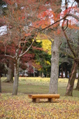 Day 2, 奈良鹿公園‧世界遺產東大寺:DSC05420.JPG