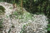2013 土城桐花,白雪紛飛...落花鋪滿菜園裡~~:IMG_9008.JPG