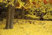Day 2, 奈良鹿公園‧世界遺產東大寺:DSC05403.JPG