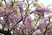一段公車票‧帶來一段不可思議的紫色奇蹟~~:IMG_5679.JPG